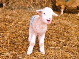 Silcocks Spring open day/ POSTPONED until July 2020 @ Silcocks Farm   Saint Michaels   United Kingdom